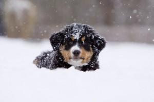 HondinSneeuw